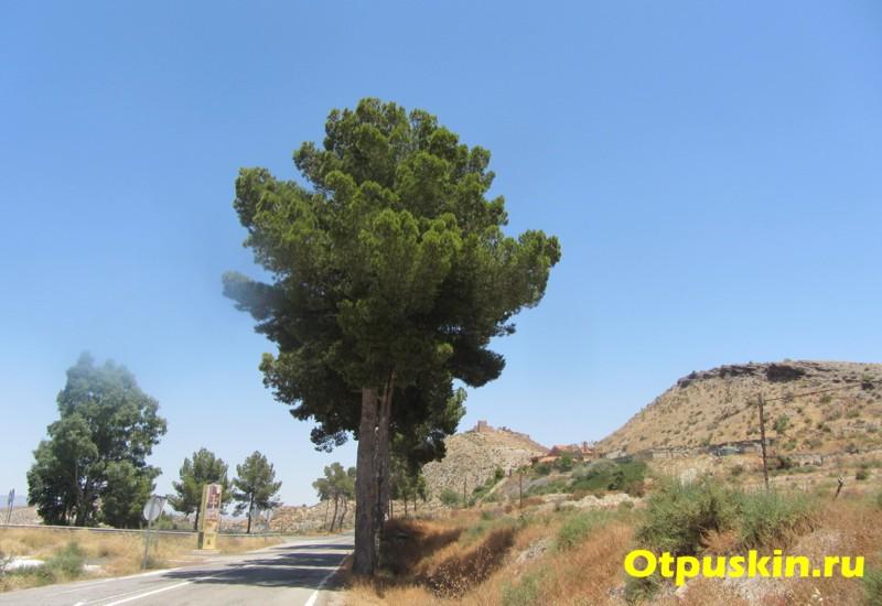 природа в испанской альмерии