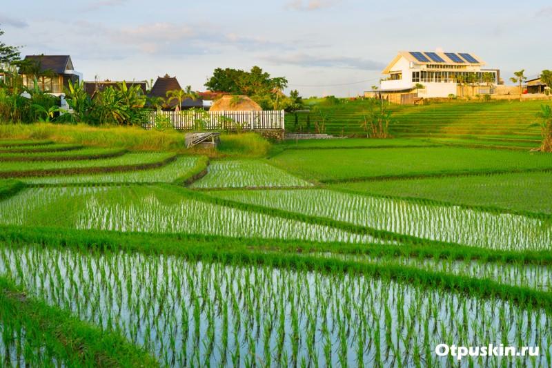 Рисовые поля на острове Бали в Индонезии