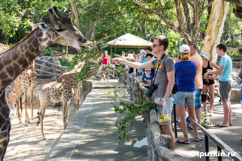 Покормить животных в зоопарке Као-Кхео в Паттайе