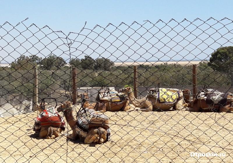 Отзывы о зоопарке Фригия Хаммамет тунис верблюды