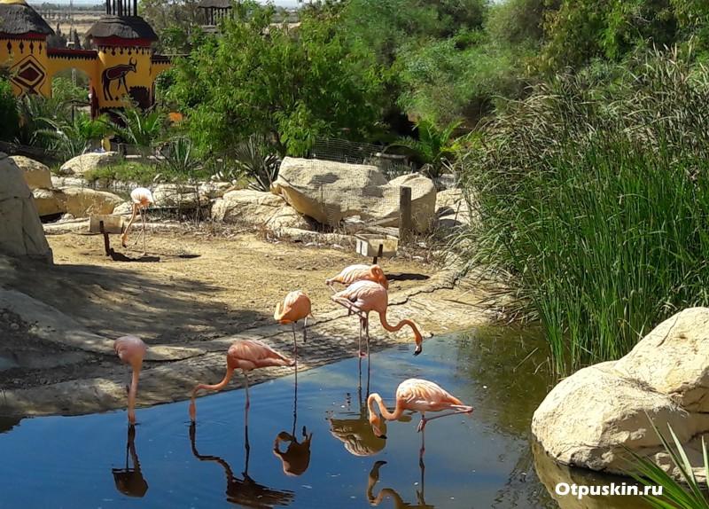 Отзывы о зоопарке Фригия Хаммамет